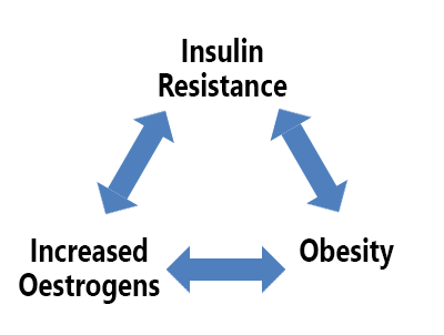 Insulin Resistance, Obesity and Oestrogen link